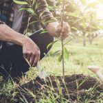 Man celebrates National Forest Week by planting trees